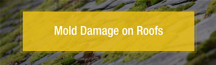 Mold Damage on Roofs - Banner